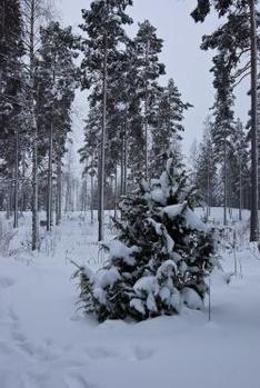 Skiurlaub im Tauferer Ahrntal: Sand in Taufers